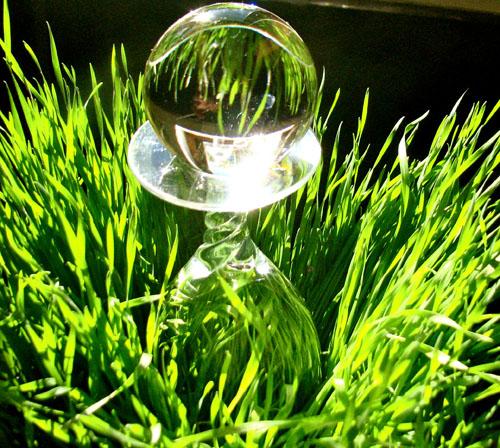 Wheatgrasscrystalball